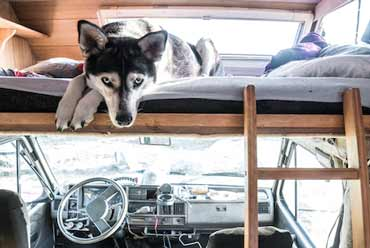 Pet Friendly RVs